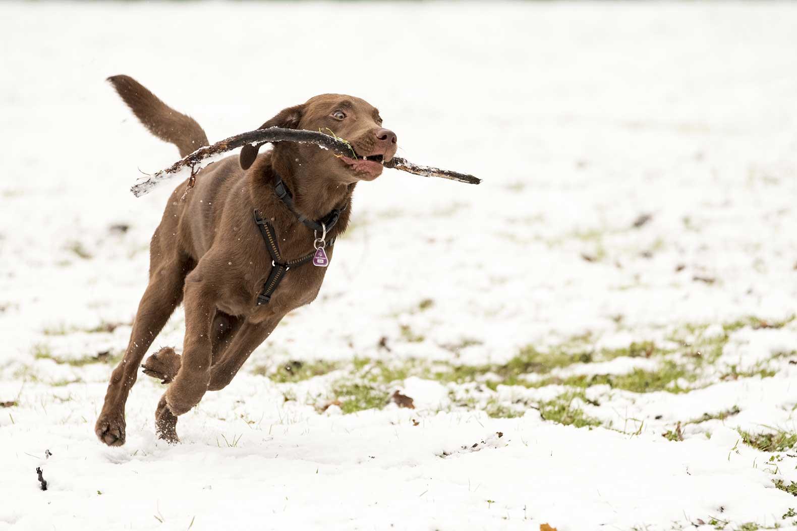 Junghundtraining im Dezember